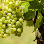 Tips like those show how you may without problems comprise grapes into every meal