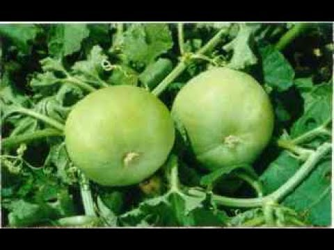 How to Grow Tiendas to your terrace for natural greens and herbs.Image Source Youtube